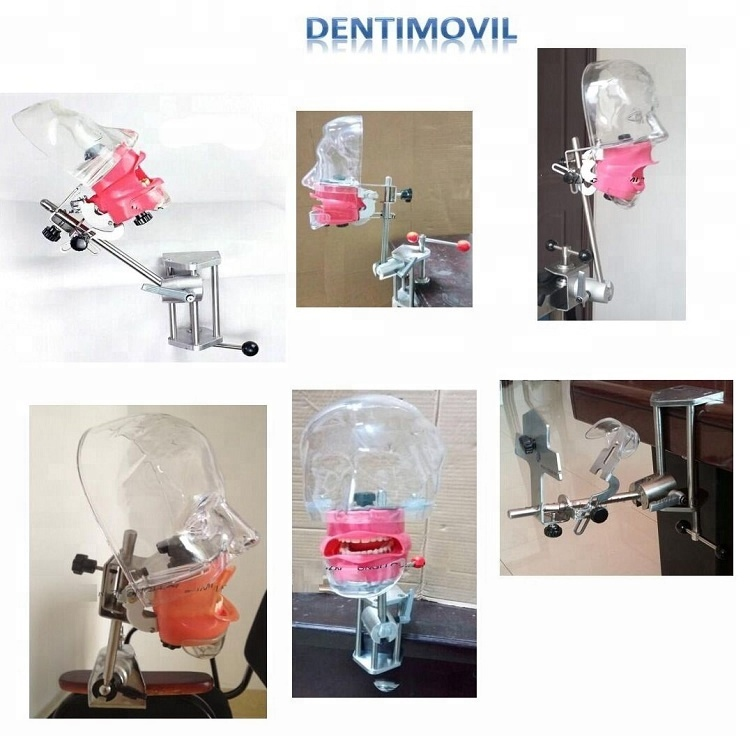 Dental Phantom head momodel/Lab equipment compatible with Nissin